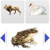 """""""Dieren groeperen voor het digibord door Gynzy, software voor het digitale schoolbord"""""""