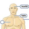 """""""Menselijk lichaam voor het digibord door Gynzy, software voor het digitale schoolbord"""""""